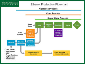 msu-cellulosic-ethanol-300x226 Cellulosic Ethanol Fact Sheet Automobiles and Energy Ethanol Food and Wine Technology