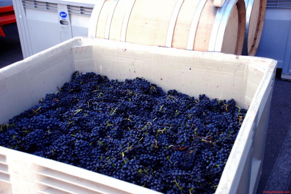Grapes Autry cellars artisan winery experience Automobiles and Energy Food and Wine Travel & Leisure