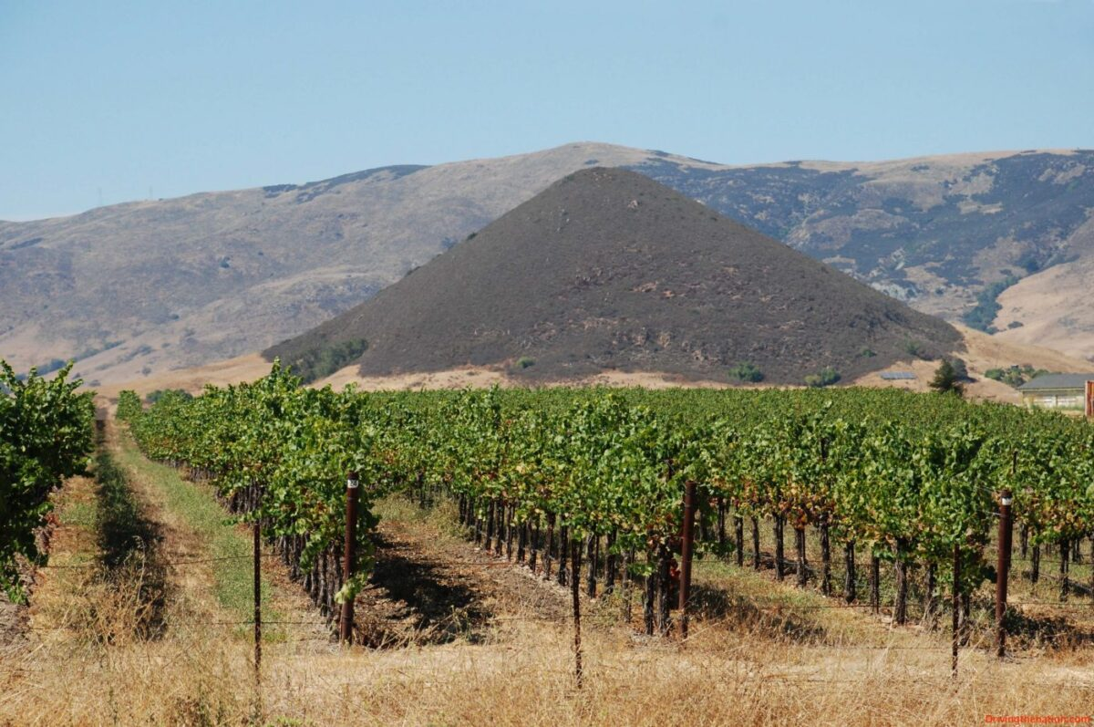 Vineyard-and-Islay-Peak-Volcanic-Plug Autry cellars artisan winery experience Automobiles and Energy Food and Wine Travel & Leisure