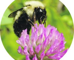 Bee decline linked to insecticides called neonicotinoids