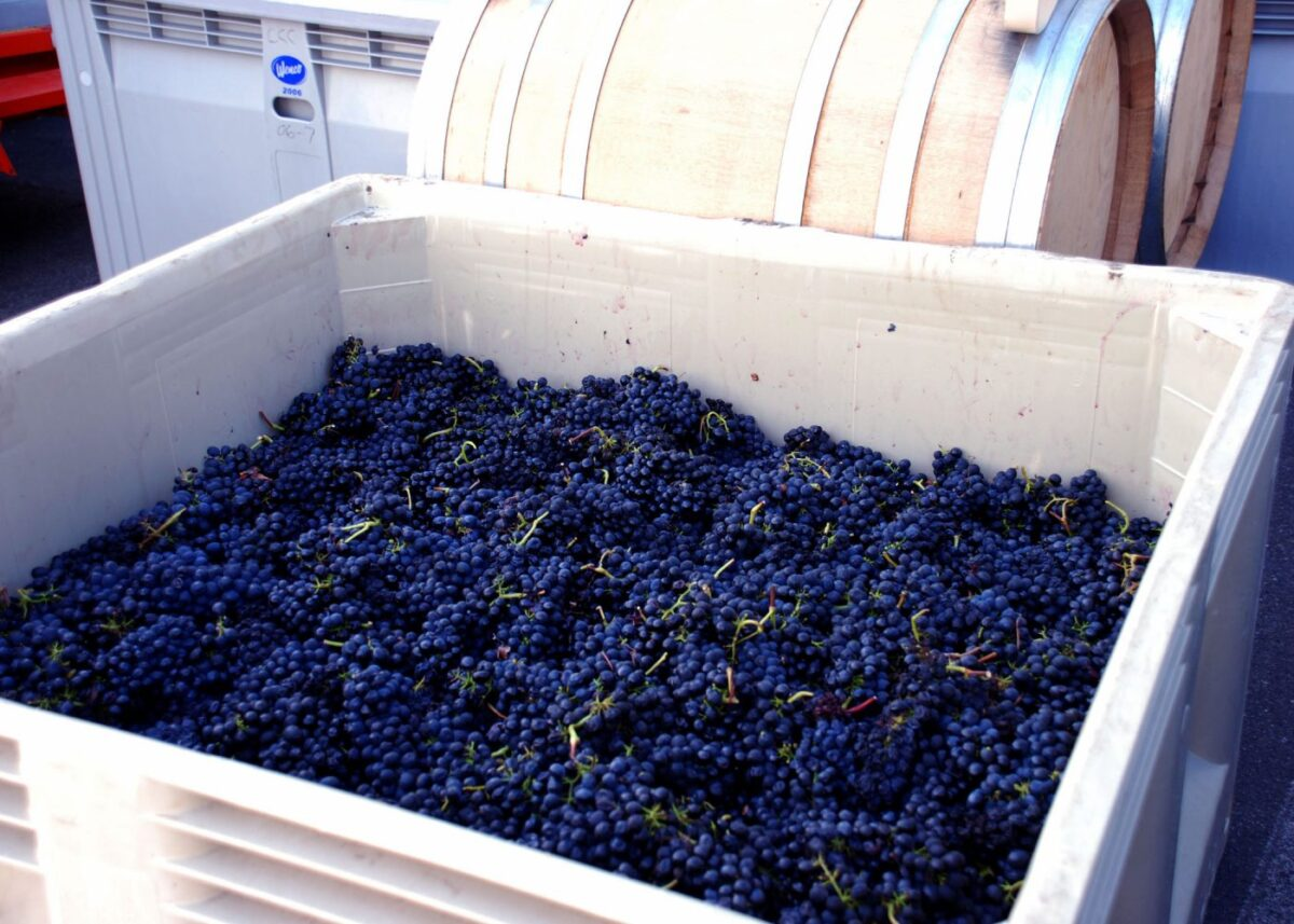 Grapes-5x7 Autry cellars artisan winery experience Automobiles and Energy Food and Wine Travel & Leisure