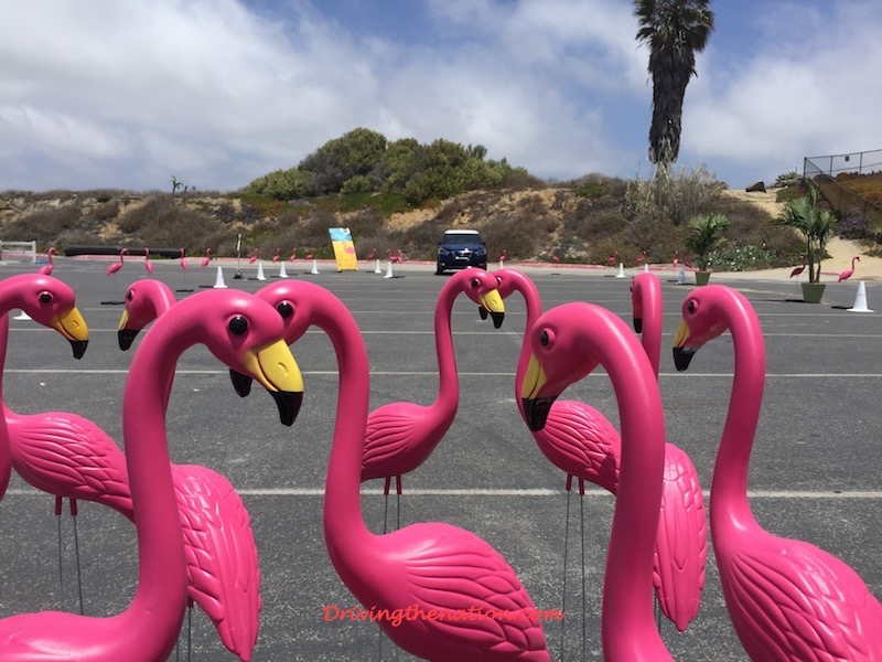 pink_flamingos 2018 Nissan Kicks for millineals and baby boomers Nissan